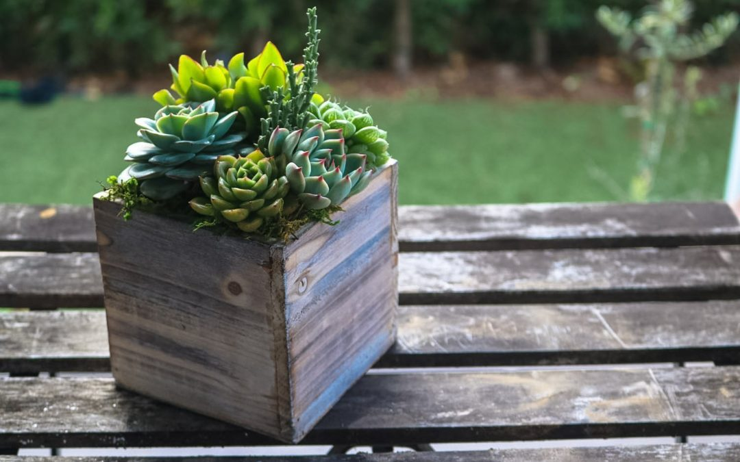 Your Savvy Succulents September 28th